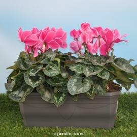 Jardiniere à poser grise CHAPELU-Millesia