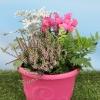 Box automne Conte de fée (5 plantes + 1 terreau)