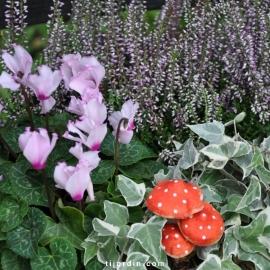 Pack automne Conte de fée (5 plantes + 1 terreau)
