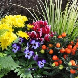 Box automne Tendresse & Gourmandise (5 plantes + 1 terreau)