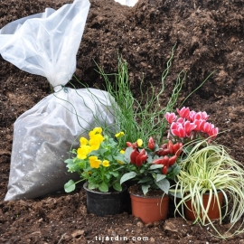 Pack automne Tendresse & Gourmandise (5 plantes + 1 terreau)
