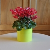 Cache pot b. for diamond elho 11cm