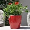 Zinnia hybride 'Zahara' orange fleurie