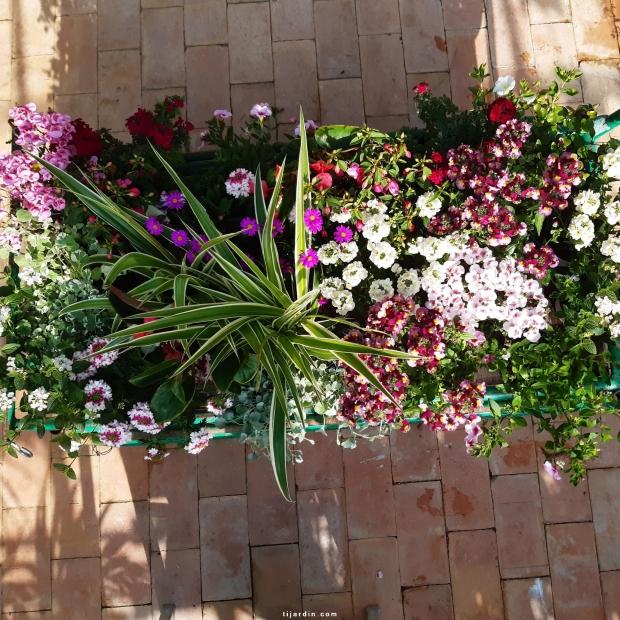 lot de plantes 'EDEN'