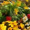 Lot de plantes 'LATINO'