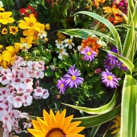 Lot de plantes 'TUTTI FRUTTI'