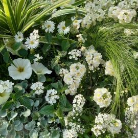 Lot de plantes 'ZEN'