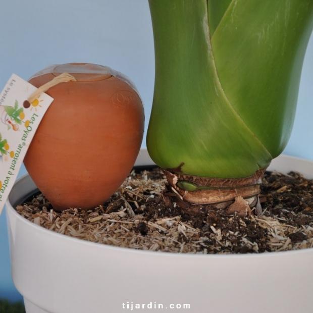 Oyas® à planter nature 0.25L