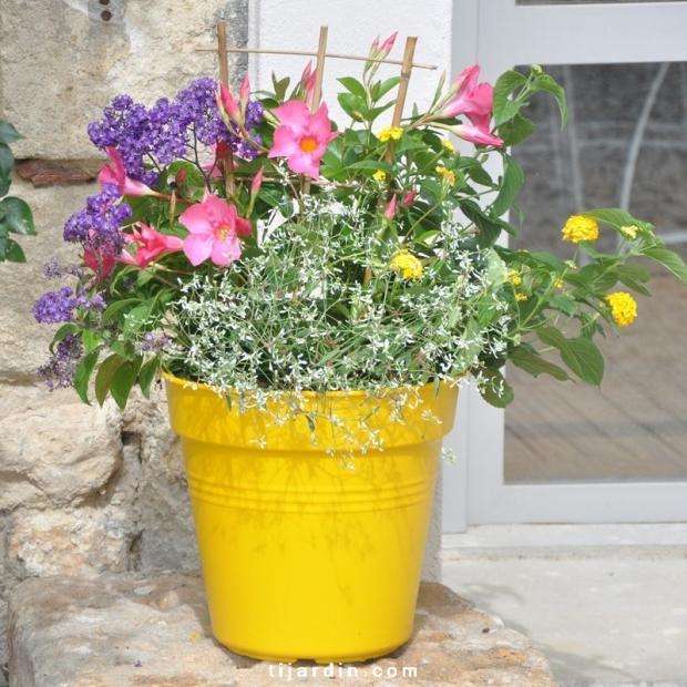 Box Tijardin multicolore