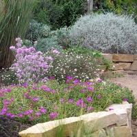 Les plantes adaptées à la sécheresse