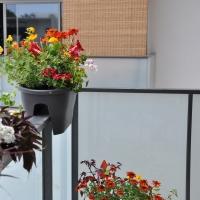 Les plantes pour balcons et terrasses