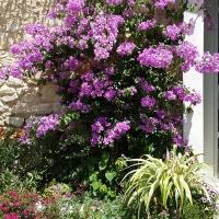 Les plantes pour jardins