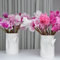 Collection de Cyclamen
