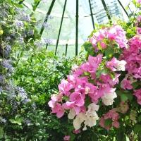 Les plantes tropicales pour véranda et serre