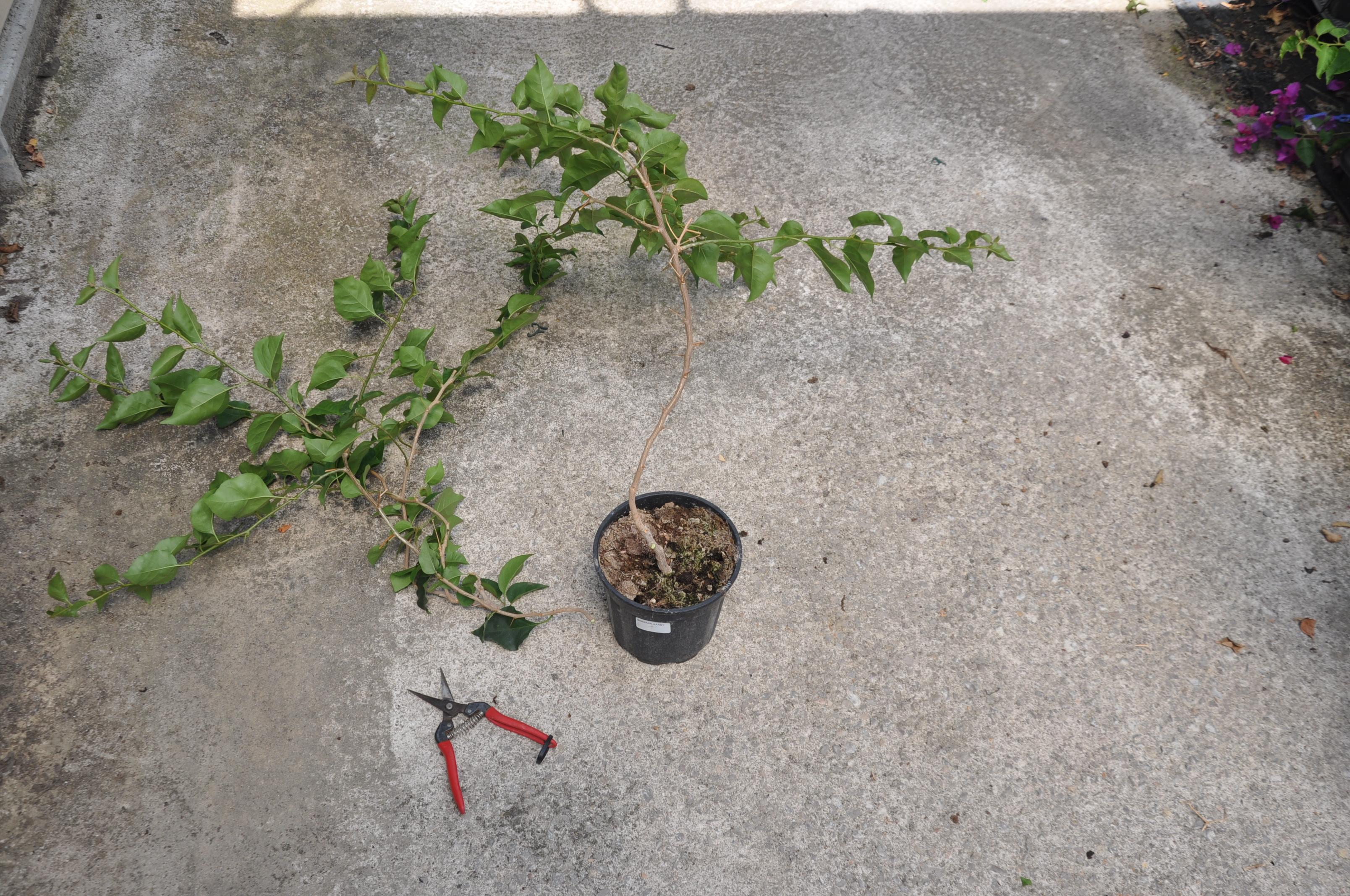 couper les autres branches fin