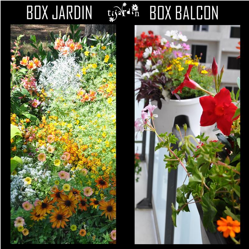 Exemple d'abonnement végétal: Box Tijardin 4 saisons