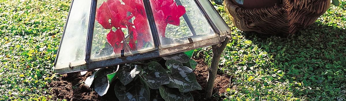 Protection contre le froid des plantes en extérieur