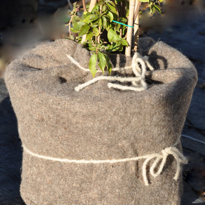 Pot couvert d'un feutre de laine pour protéger les racines de la plante