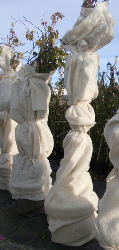 Feutre de laine utilisé pour protéger des pots de bougainvillier