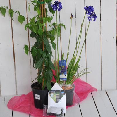 Box jardin 4 saisons exemple