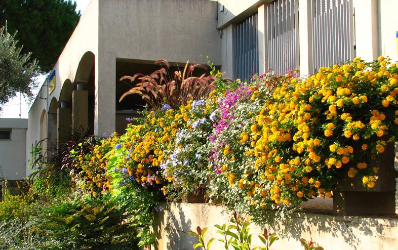 Lantana camara en bordure et jardinière