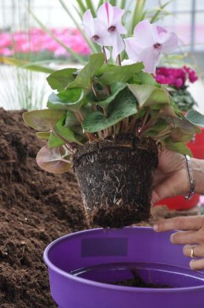 Comment planter ma jardinière d'automne ?