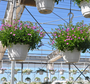 serre ouvrable pour acclimater nos plantes
