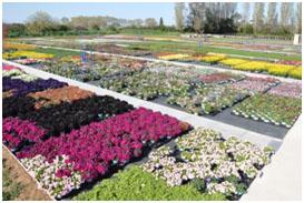 tijardin : des plantes cultivées avec passion